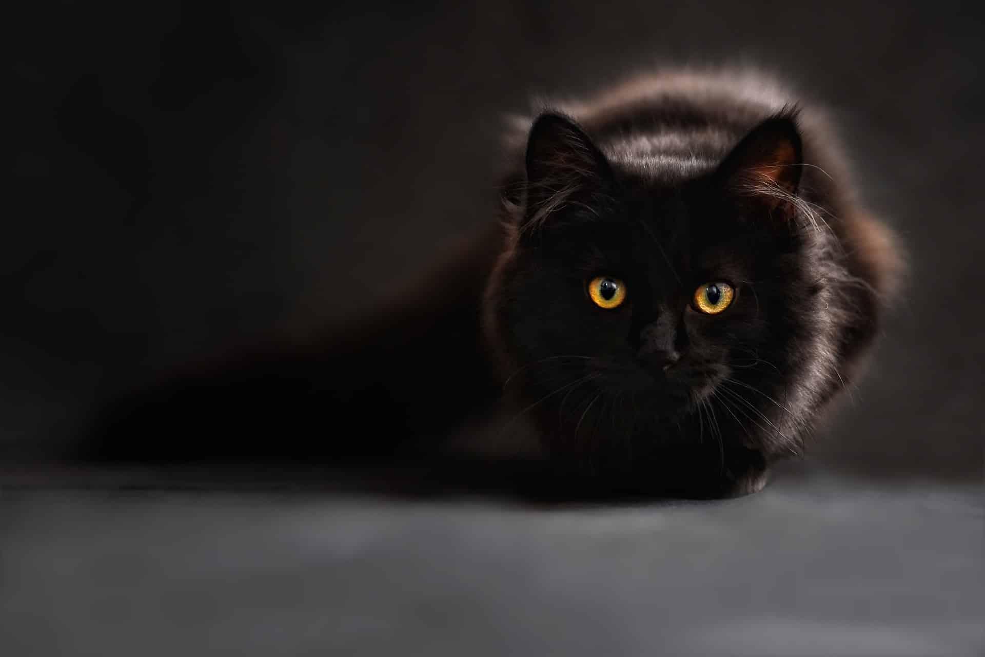 Êtes-vous un chat noir?